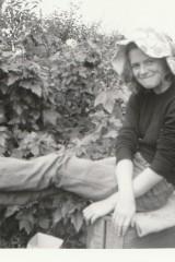 Fruit Picking Hiam's Orchard, Wood End Caroline Payne 1973