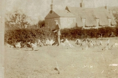Bert Mehew feeding poultry at Wood End (Bunyan Lodge)