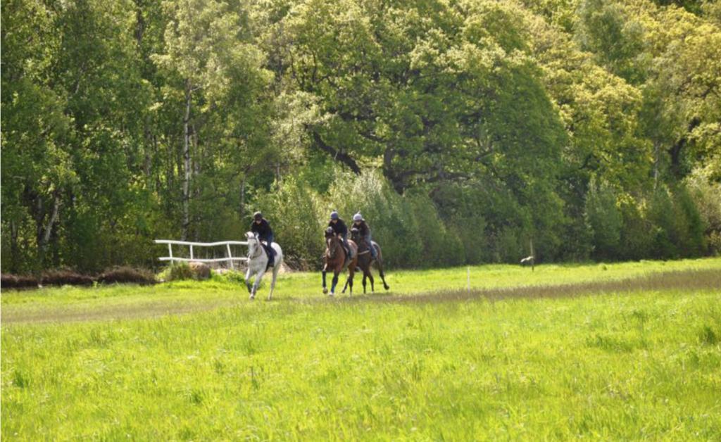 Trän och tävla hos Blommeröd Hästsport Center