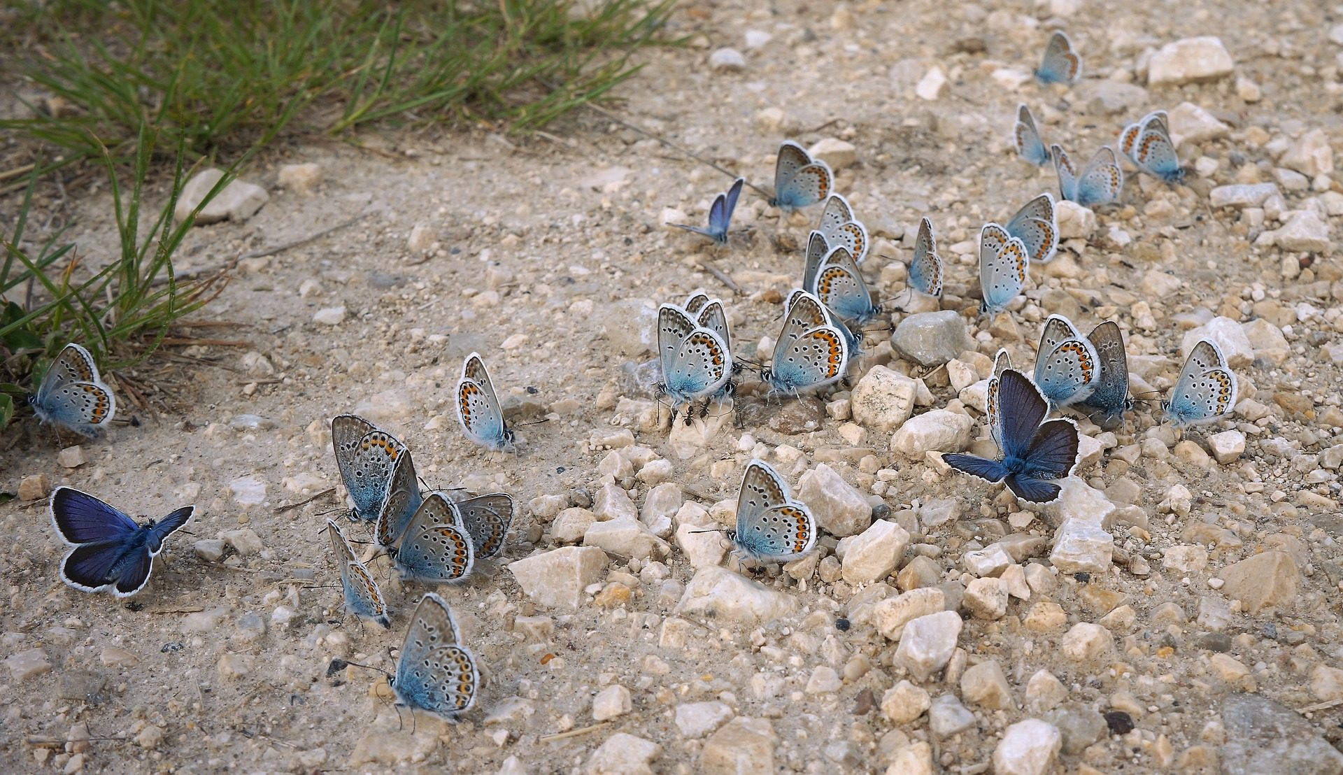 Butterflies inspiration
