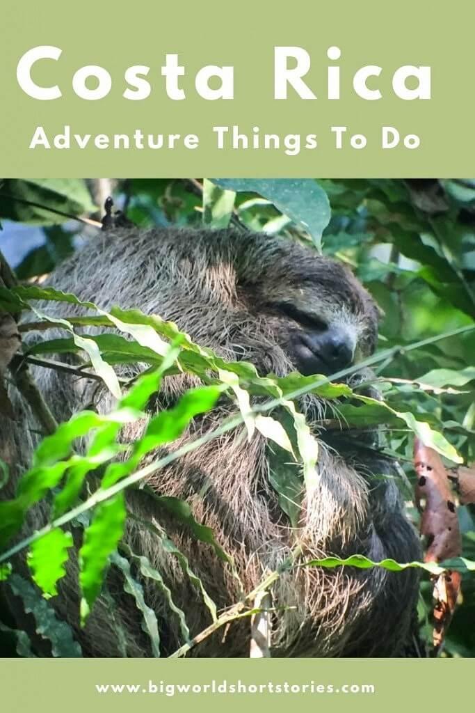 Sleeping Sloth in Costa RIcan Jungle