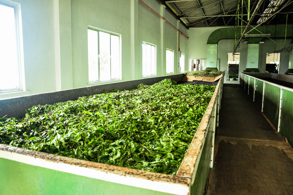 Tea Factory in Mahe island, Seychelles