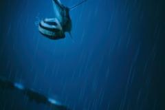 rainyNight