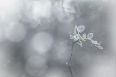 wintermagickl.1600