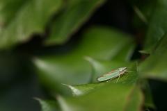 insekt1.1600