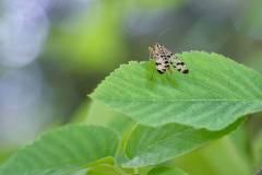 insekt2