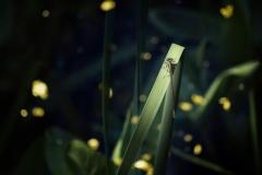 libellekl