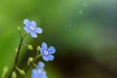 Blume3kl.1600
