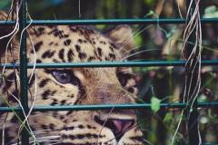 zoo-dortmund-1-2