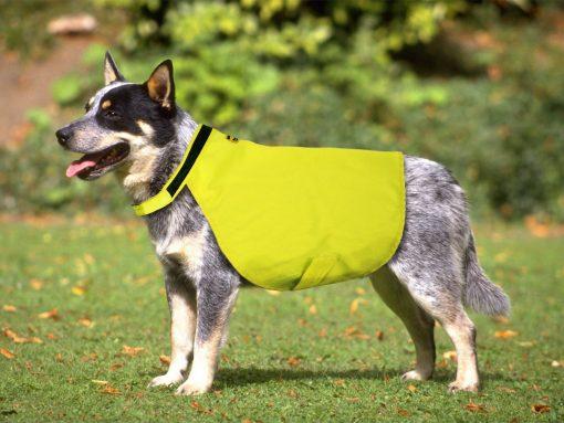 Insectshield Hundevest på hund