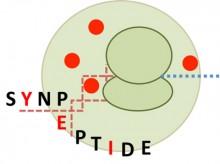 synpeptide-LOGO-web