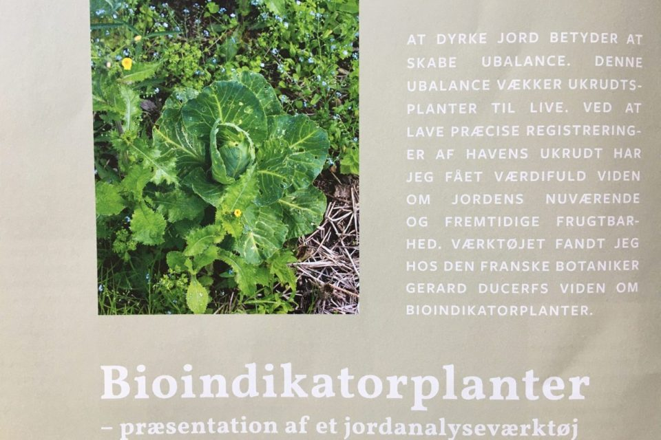 bioindikatorplanter artikel