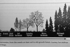 biologisk succession