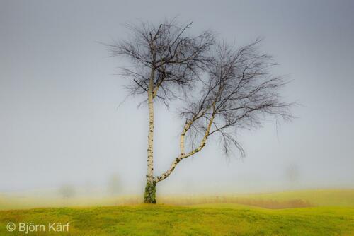 Golf in fog 7