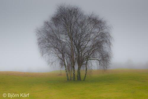 Golf in fog 4