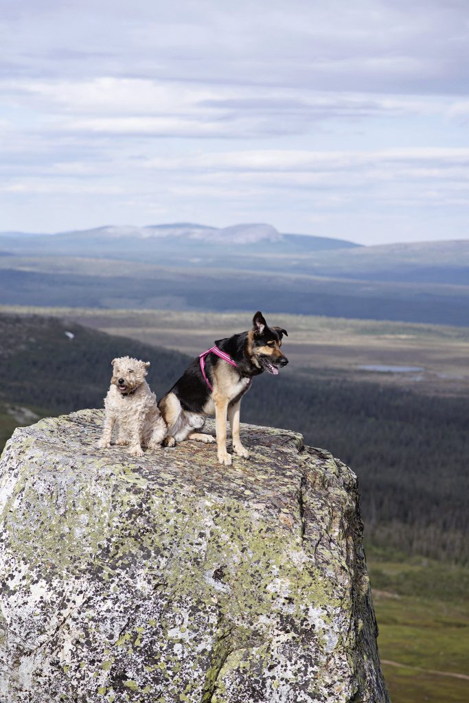 Bjurelidsfoto - hundar