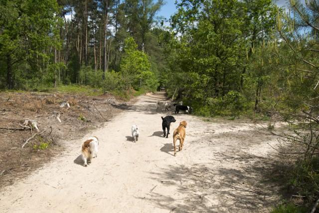 blaf-en-go-blafengo-hondenuitlaatservice-apeldoorn-DSC_0235