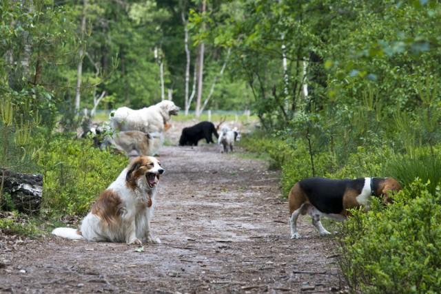 blaf-en-go-blafengo-hondenuitlaatservice-apeldoorn-DSC_0243