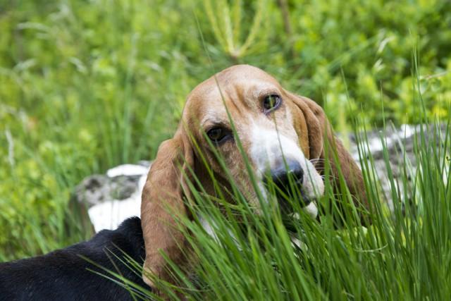 blaf-en-go-blafengo-hondenuitlaatservice-apeldoorn-DSC_0244