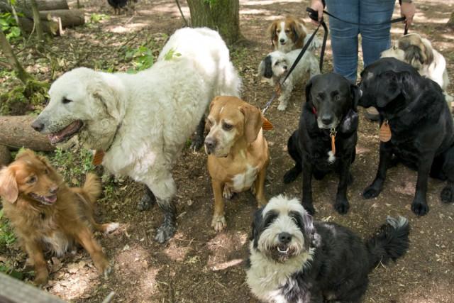 blaf-en-go-blafengo-hondenuitlaatservice-apeldoorn-DSC_0252