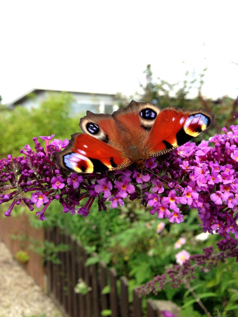 Vackra fjärilar och blommor, blir färgsprakande blickfång