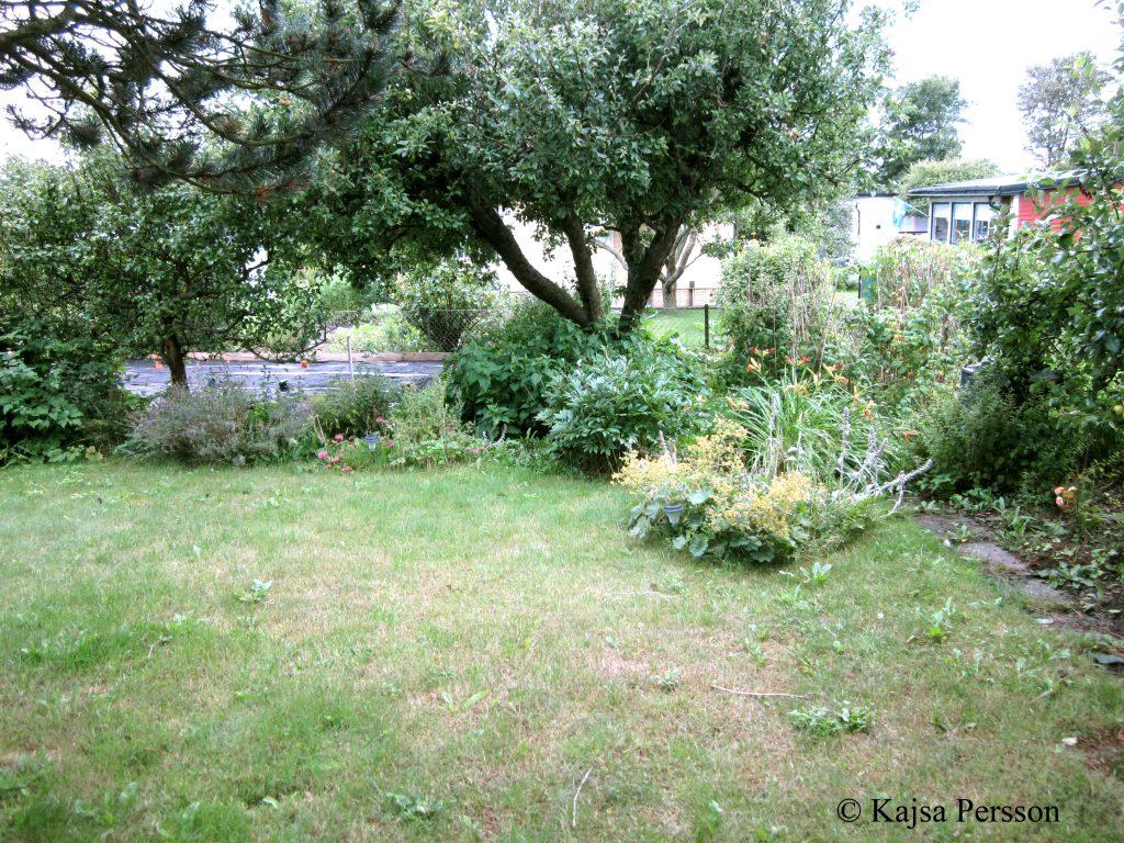 Otuktad koloni trädgård