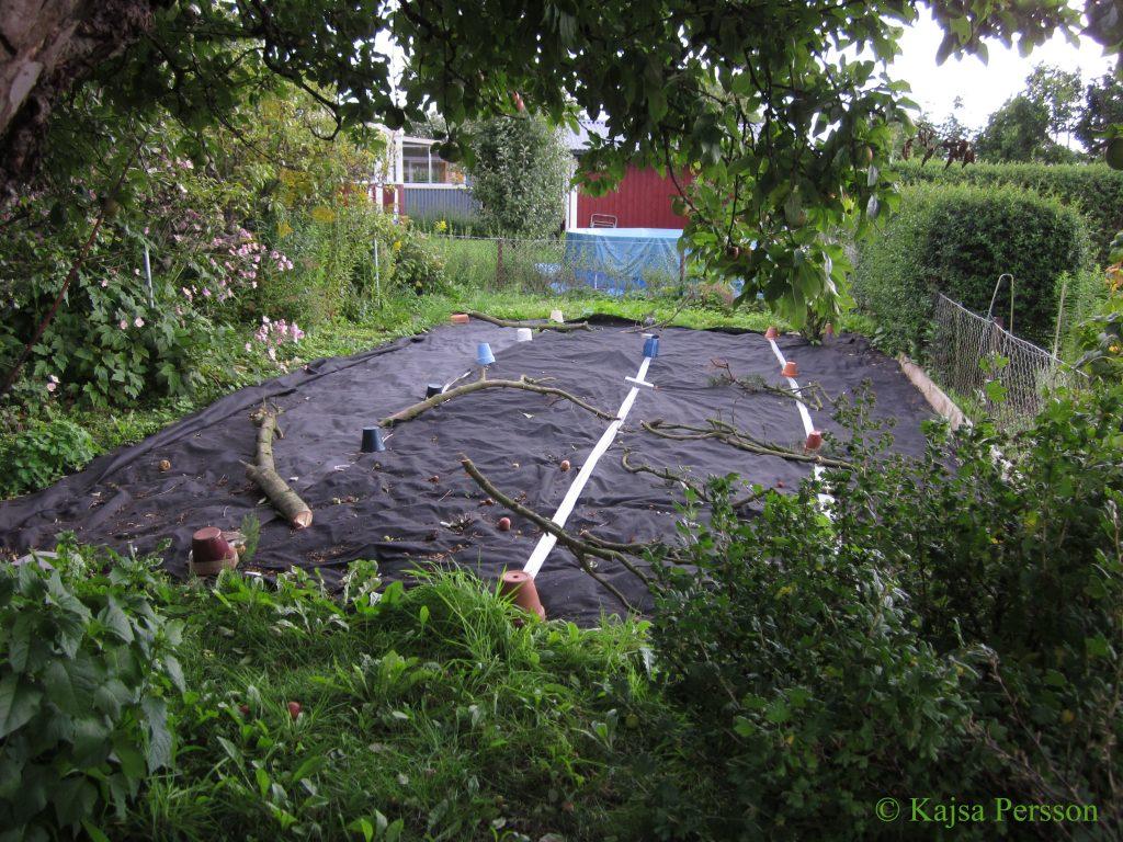 Köksträdgården finns där under fiberduken