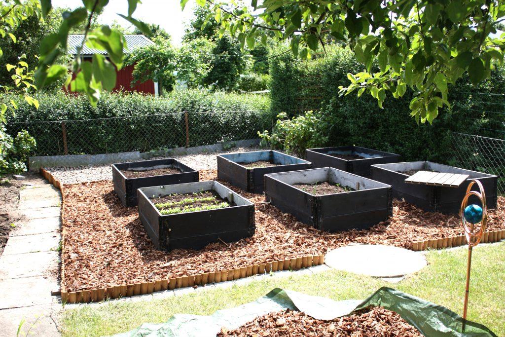 Köksträdgården på vår koloni