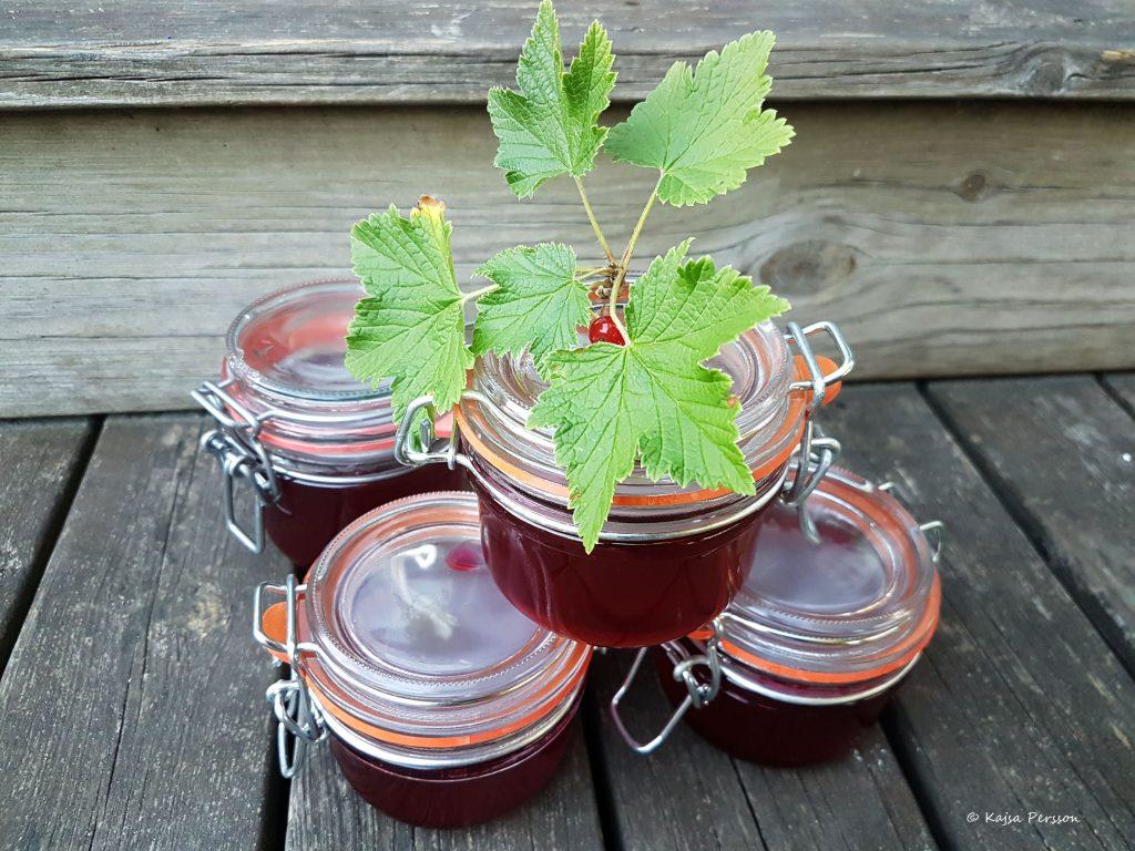 Röd Vinbärsgelé i burkar