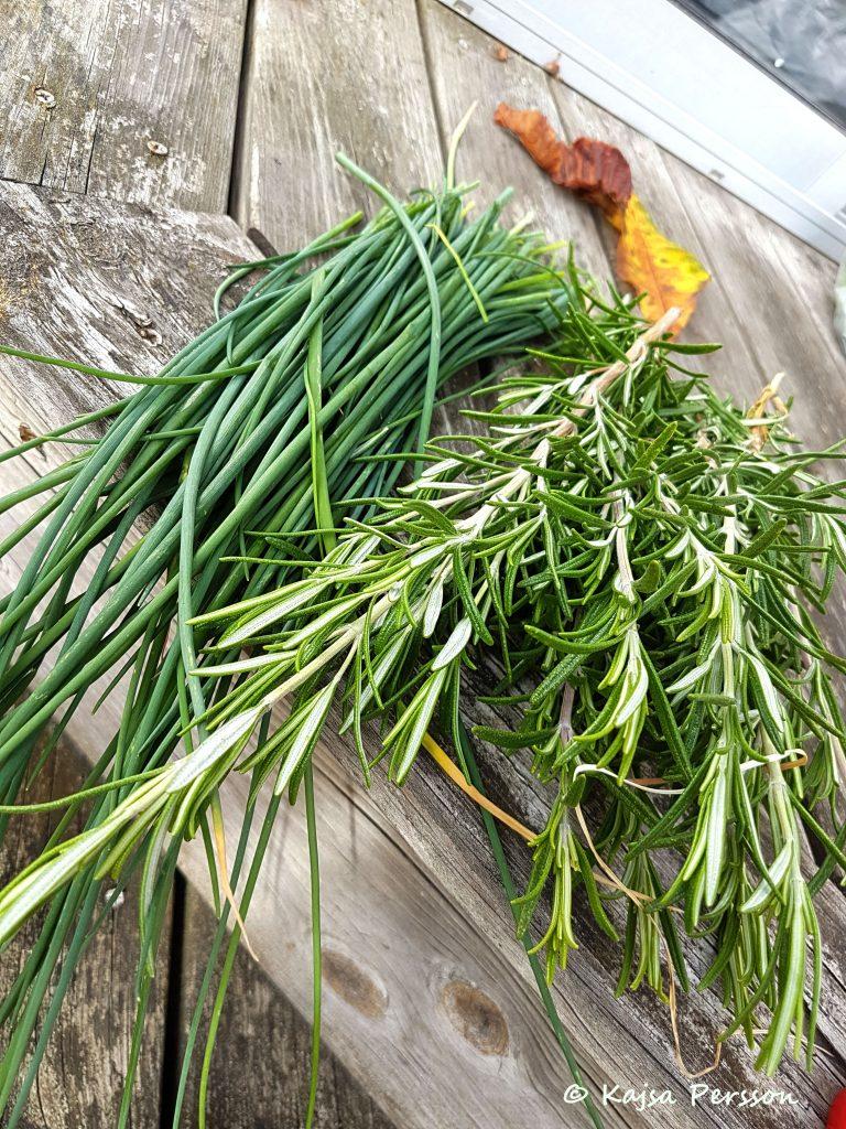 Gräslök och rosmarin från vår höstskörd i örtträdgården