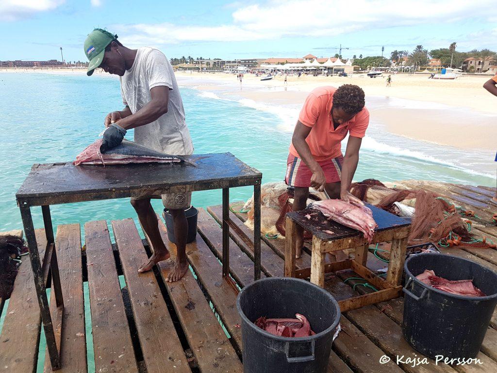 Konsttycket att file en tonfisk Santa maria, Kap Verde
