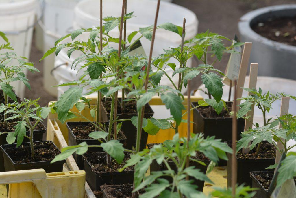säsongen har börjat och vi odlar i växthuset