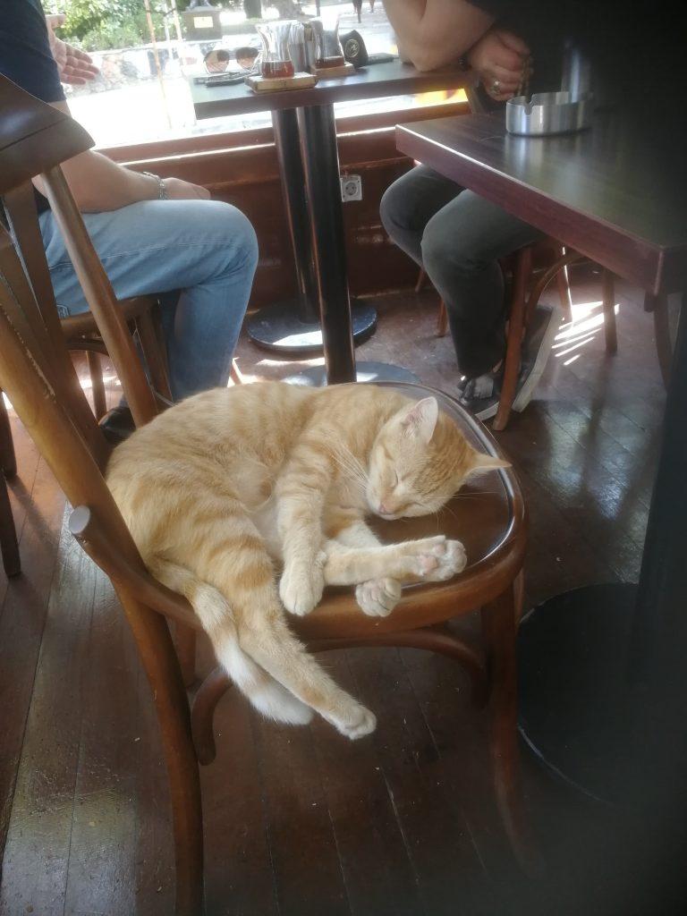 Man tar hand om de herrelösa djuren i Istanbul