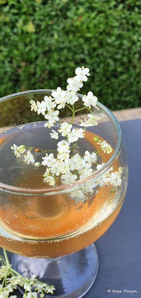 Fläderblomman fin som dekoration i glaset
