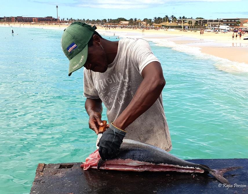Tonfisk rensas på bryggan i Santa maria, Kap Verde