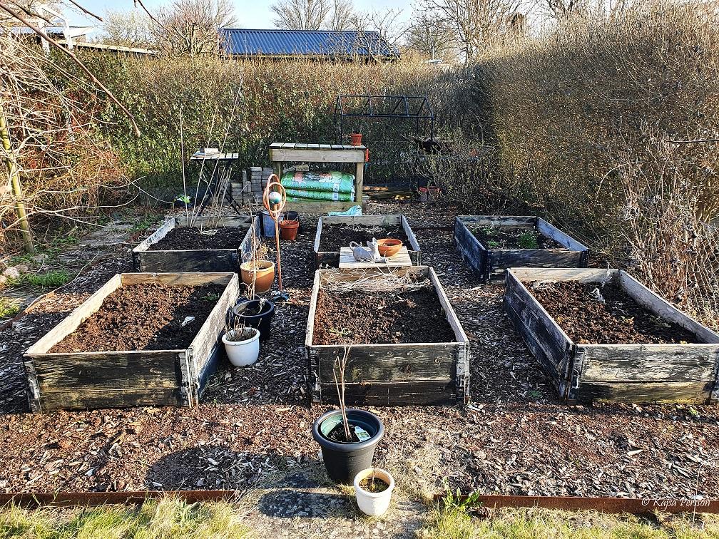 Kökslandet i koloniträdgården i April