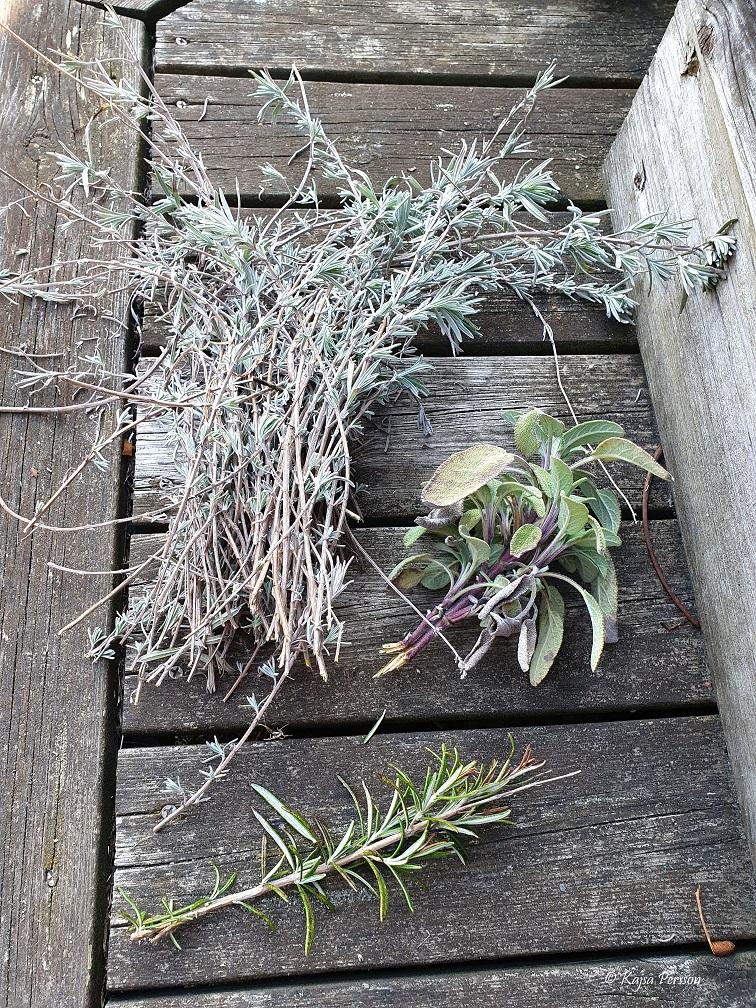 Rosmarin, Salvia, lavendel