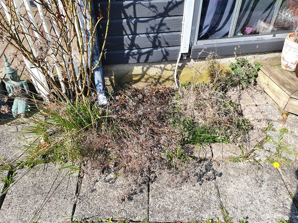 Kryddrabatten i koloniträdgården i April