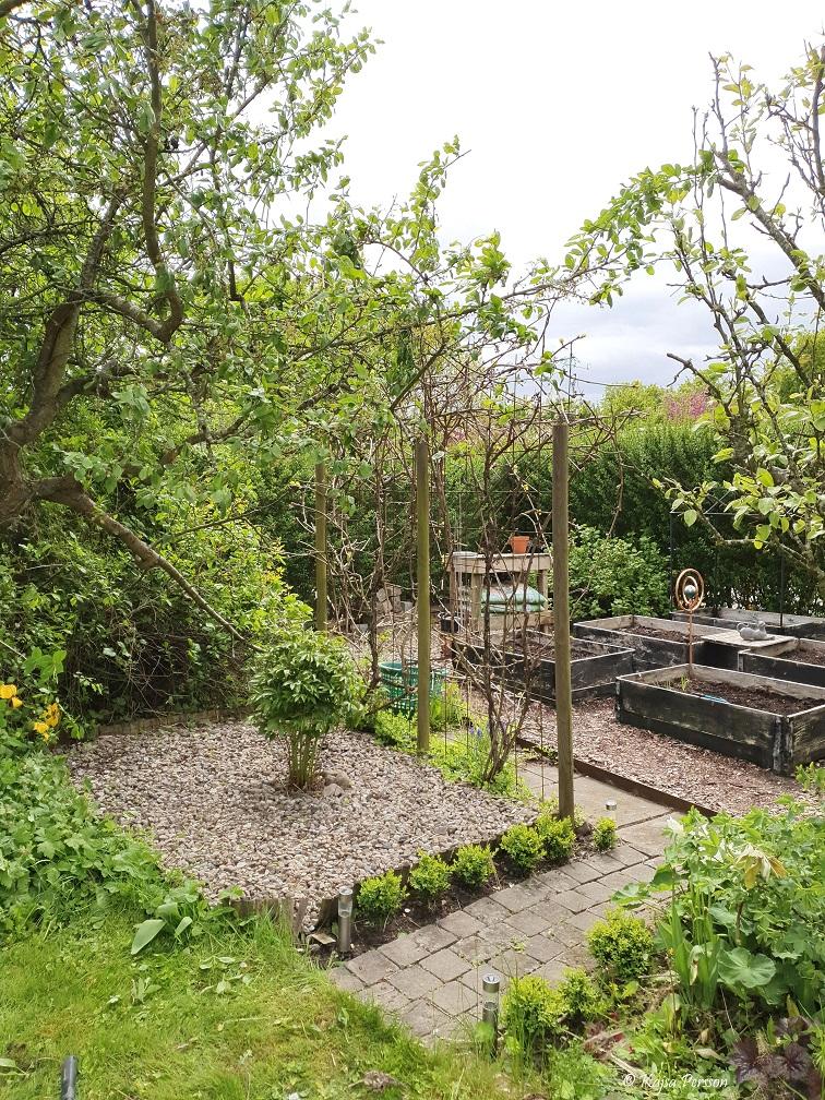Trädgårdshörna i Maj i koloniträdgården