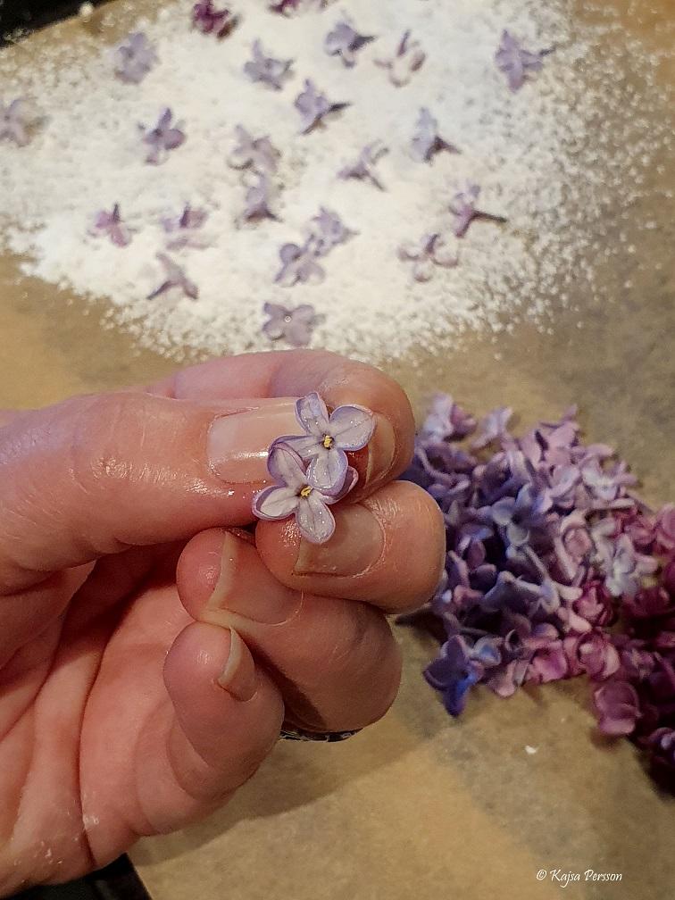 Syrenblommor i en hand