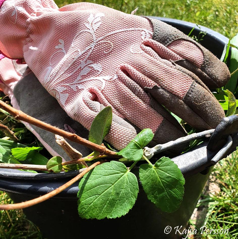 Trädgårdshandskar och ogräs