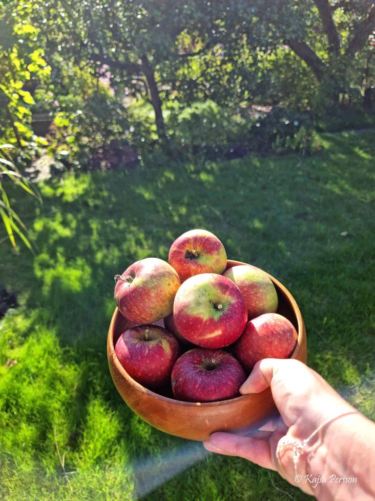 Äpple i en träskål
