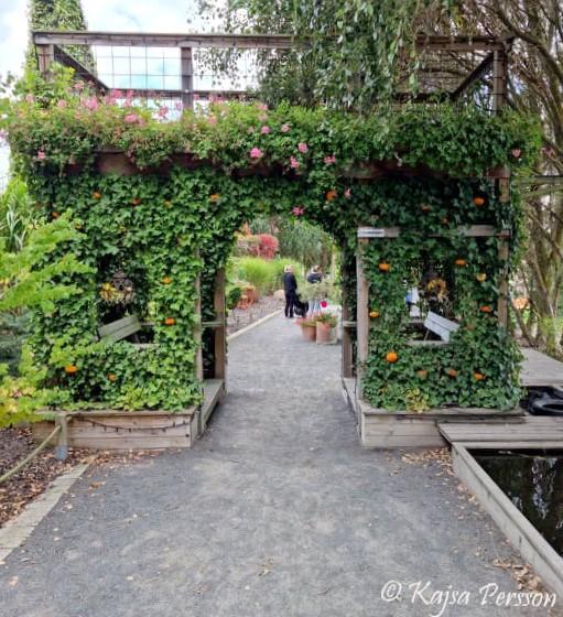 Triumfbågen på Vellingeblomman
