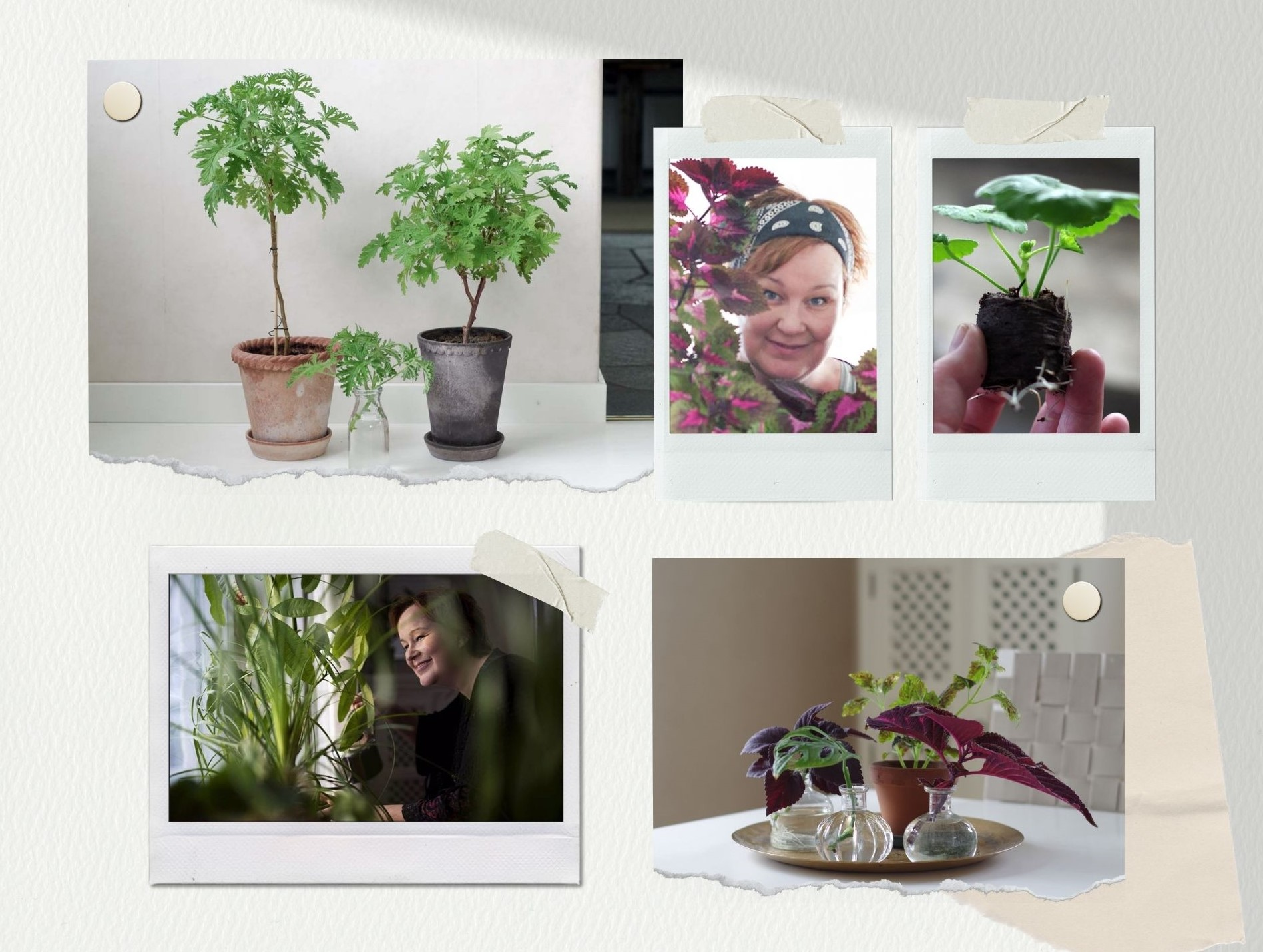 Blomfantast – bland blommor, blad och gröna växter