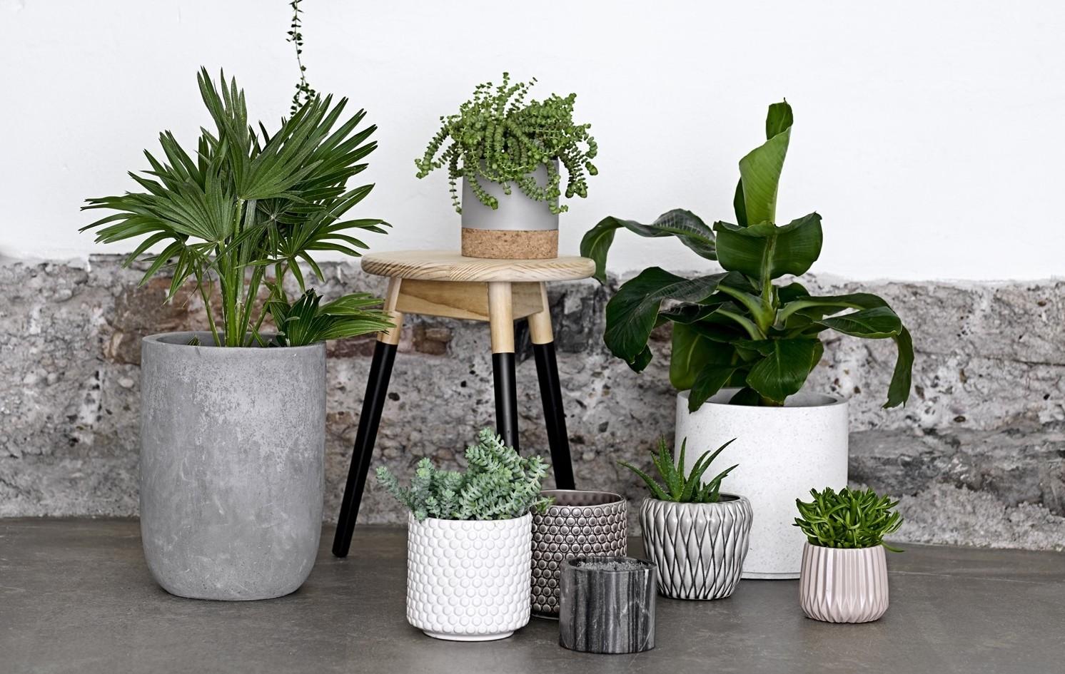 Så bygger du stilleben med växter