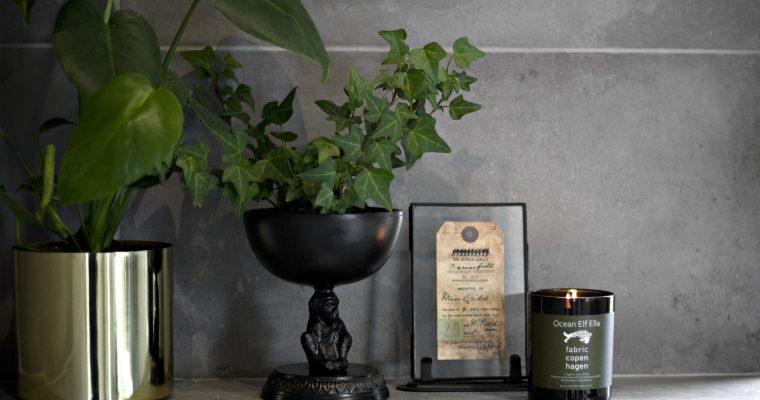 5 krukväxter som fixar inomhusluften