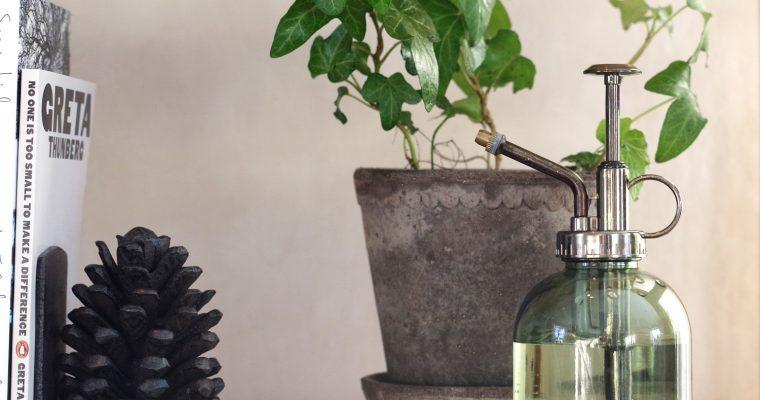 Därför ska du duscha dina växter