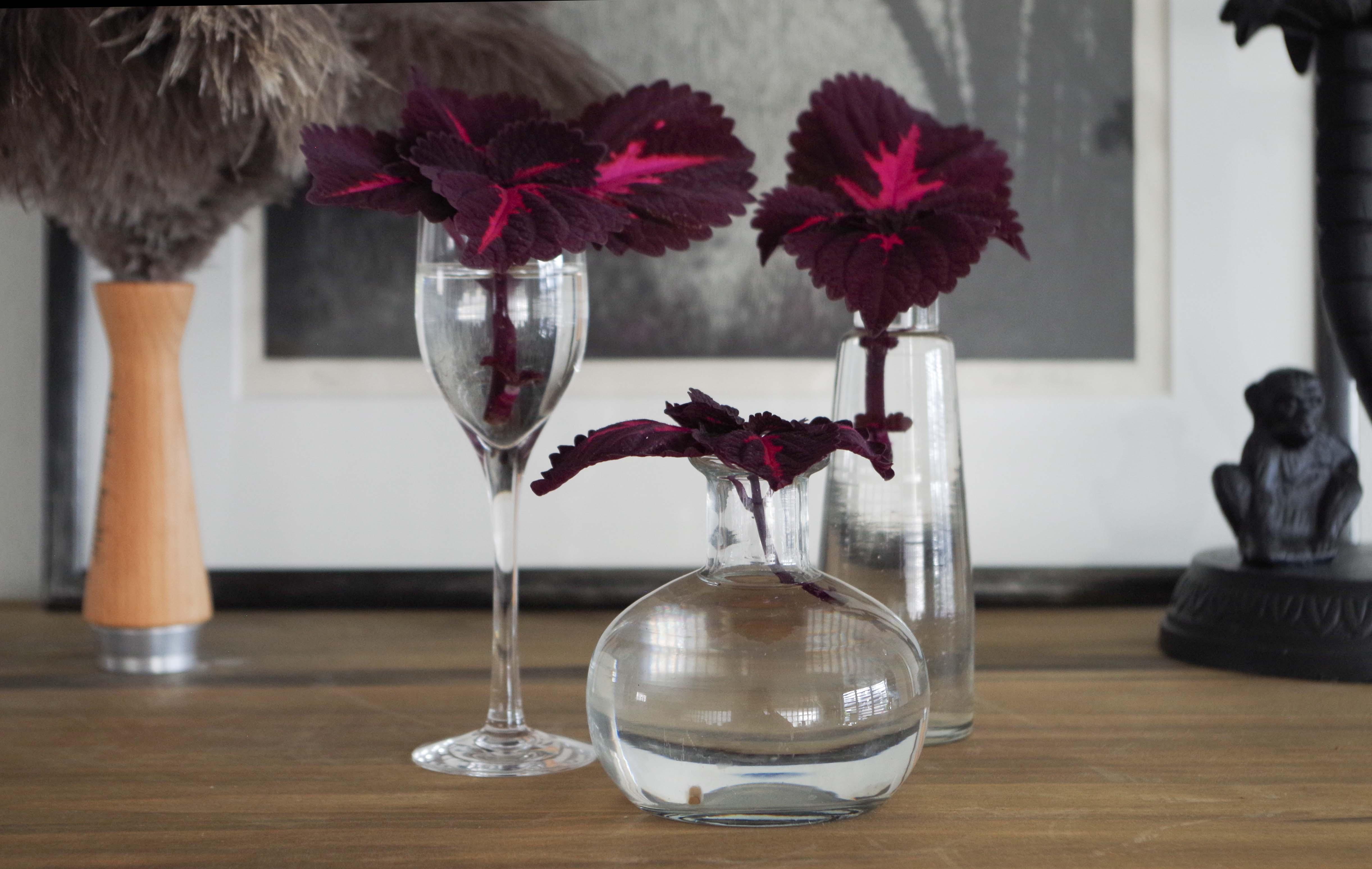Palettblad China Rose