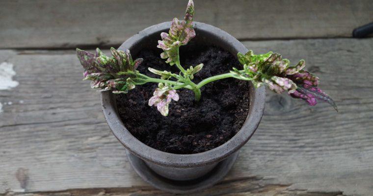 Shoppa växter på Tradera – att tänka på innan!