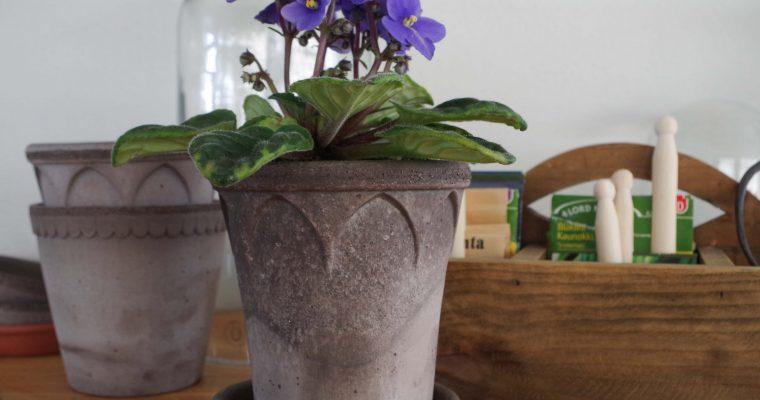 Krukväxter som statusmarkör
